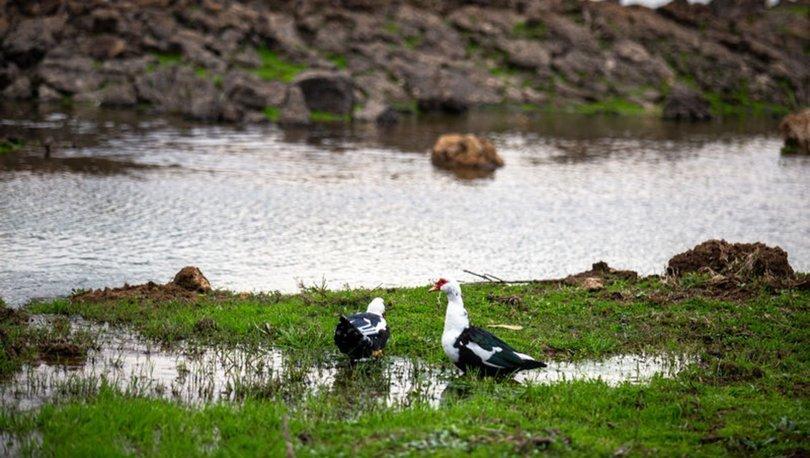 Hatay'daki volkanik Haydarlar Gölü göçmen kuşlara ev sahipliği yapıyor