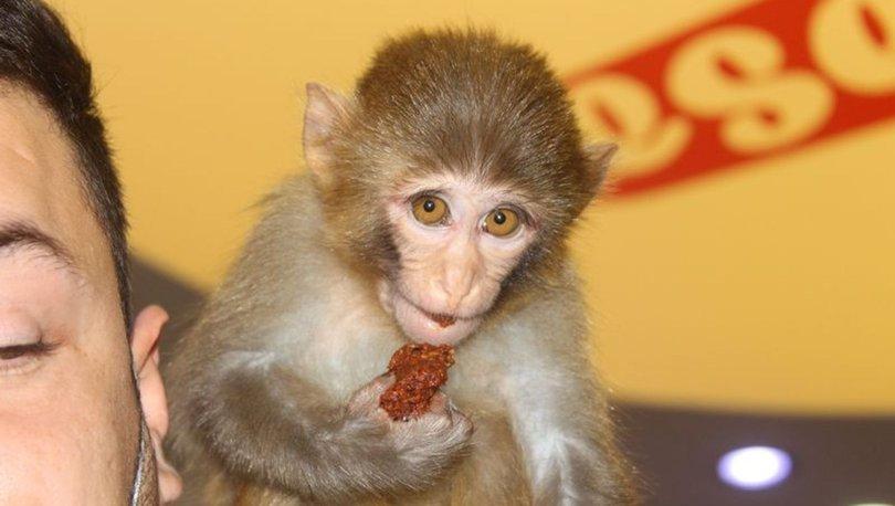 Adıyaman'daki maymun muz yerine acı çiğ köfteyi tercih ediyor