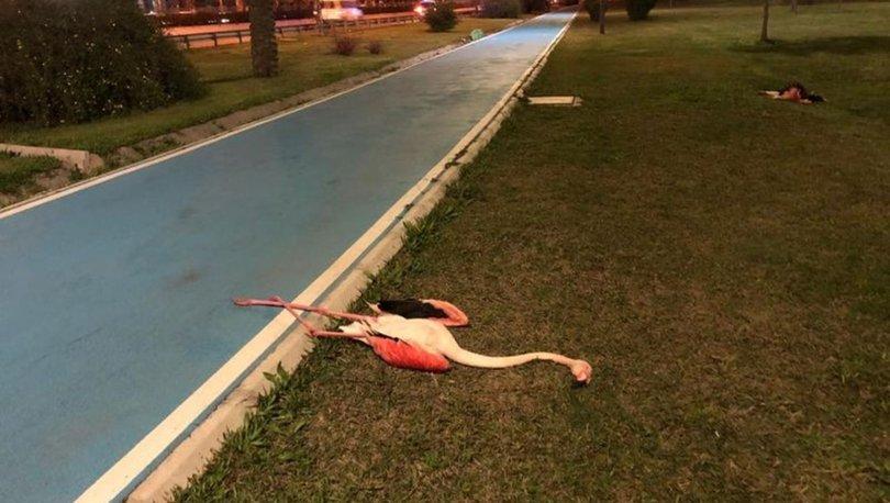 TOPLU ÖLÜM! Son dakika: İzmir'de sahilde 9 ölü flamingo bulundu! - Haberler