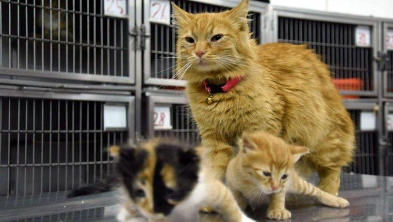 Anne kedinin veterinere getirdiği yavrular sahiplenildi