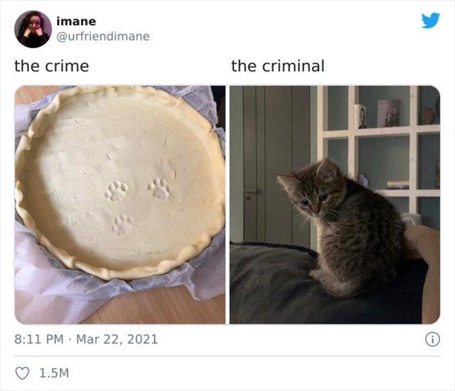 Suçüstü yakalanan hayvanlar sosyal medyada fenomen oldu