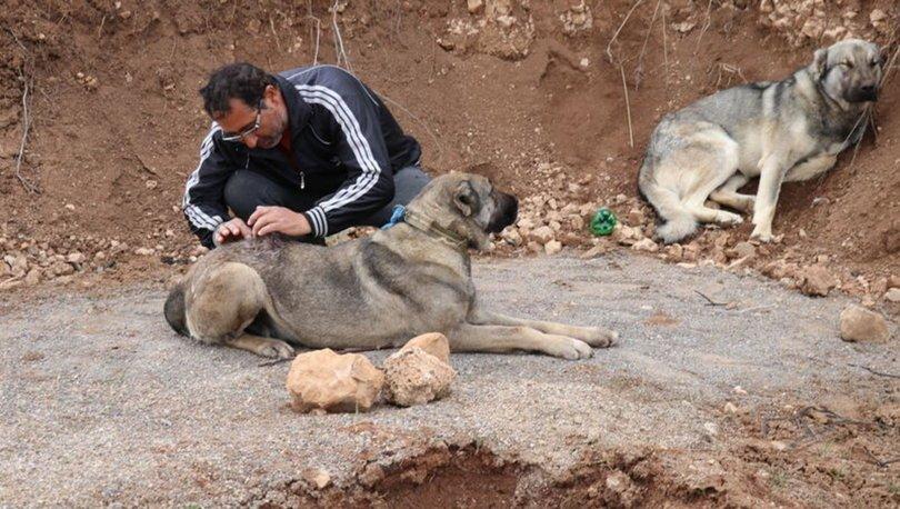 Vicdansızlar! SON DAKİKA: Köpeklere bıçaklı saldırı
