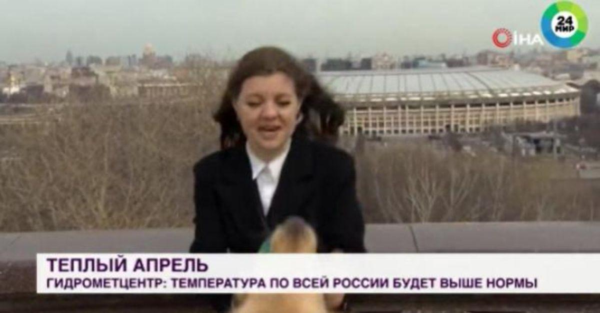 Rus muhabir mikrofonunu canlı yayında köpeğe kaptırdı - Dünya Haberleri