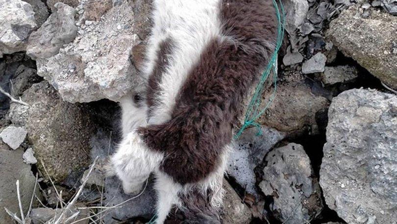 Van Çaldıran'da metruk binada çok sayıda ölü köpek bulundu