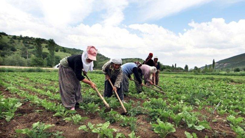 2021 tarımsal desteklemeler yattı mı? 2021 Mazot, gübre, süt, tarım desteği sorgulama ekranı