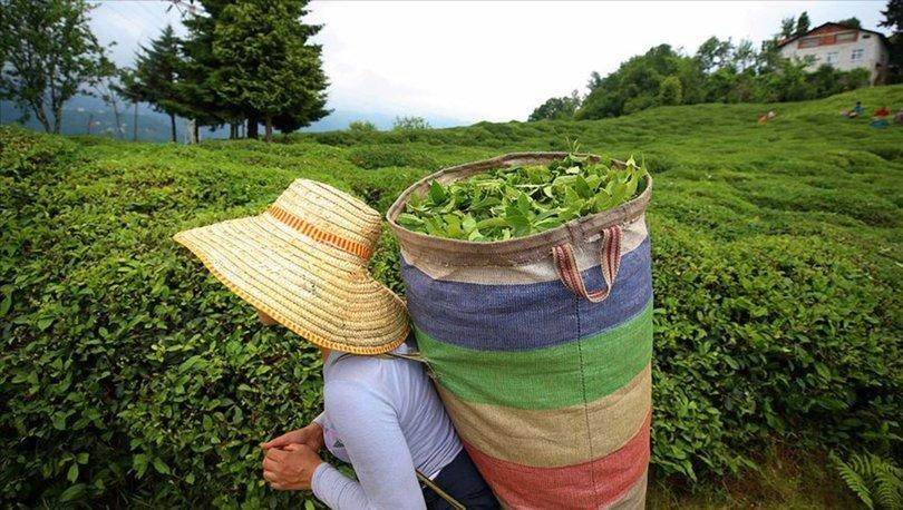 Türkiye'den ilk çeyrekte çay ihracatından 5.1 milyon dolar gelir
