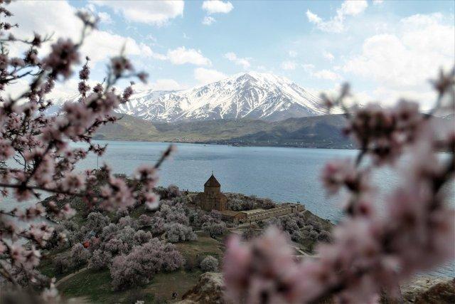 Akdamar Adası çiçek açan badem ağaçlarıyla farklı bir güzelliğe büründü