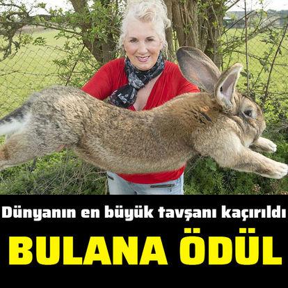Dünyanın en büyük tavşanı kaçırıldı, bulana ödül!
