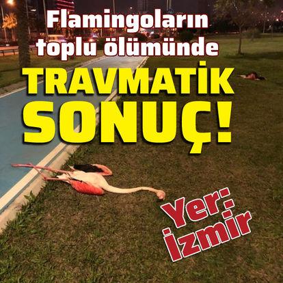 Flamingoların toplu ölümünde travmatik sonuç!