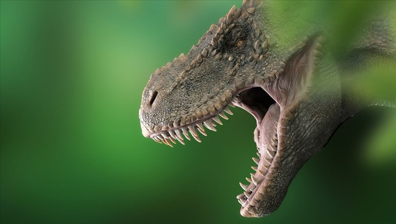 Dünyada 2,5 milyar T-rex dinozor türü yaşamış olduğu tahmin ediliyor