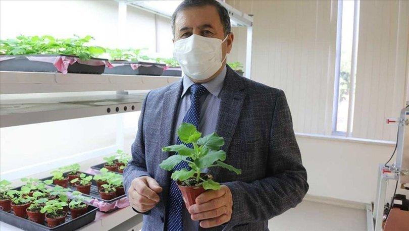 Akdeniz Üniversitesi Covid-19'a karşı ilaç ve aşı adayı geliştirildiğini açıkladı