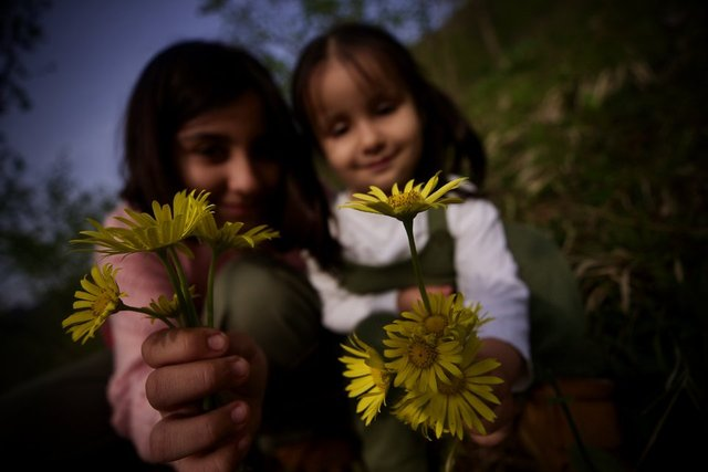 Batı Karadeniz yaylaları çiçeklerle renklendi