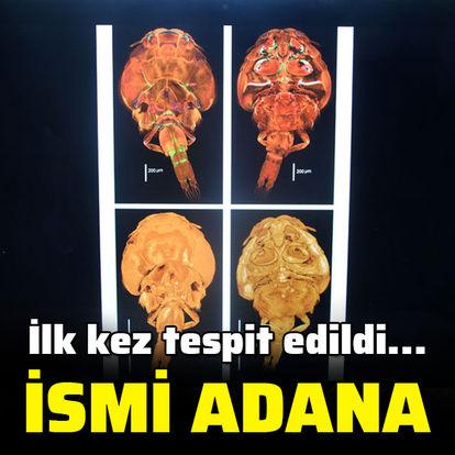 İlk kez tespit edildi... İsmi Adana!