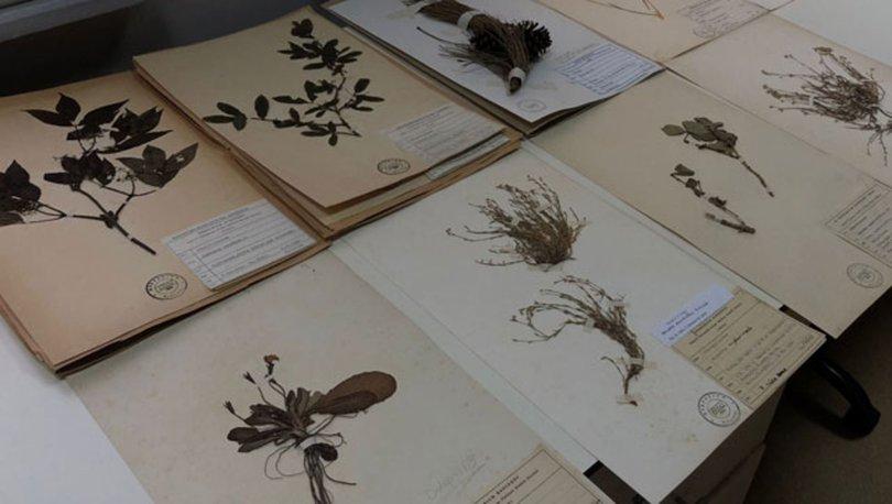 Türkiye'nin bitki kütüphanesi... 37 bin bitki örneği var
