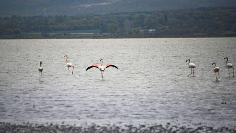 Tarihi Gelibolu Yarımadası flamingolarla ayrı güzel