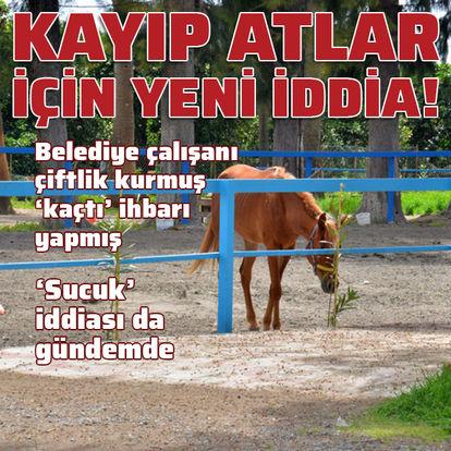 Hatay'da kayıp atlarla ilgili yeni gelişme!