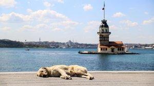 Türkiye'nin tamamı güneşli