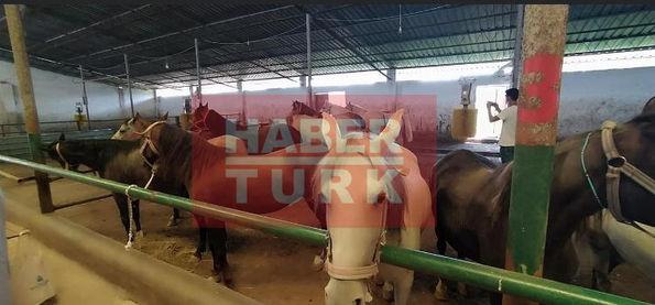 Daday Belediyesi'ne hibe edilen atlar.