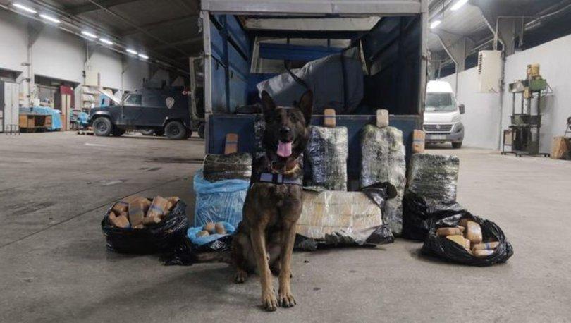 'Rexo' yine buldu: Tam 216 kilo