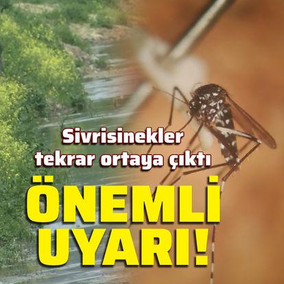 Sivrisinekler tekrar ortaya çıktı