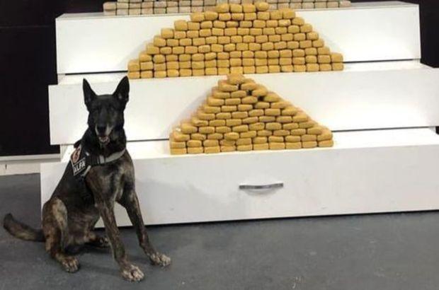 Araçtaki 139 kilo eroini narkotik köpeği 'Alfa' buldu