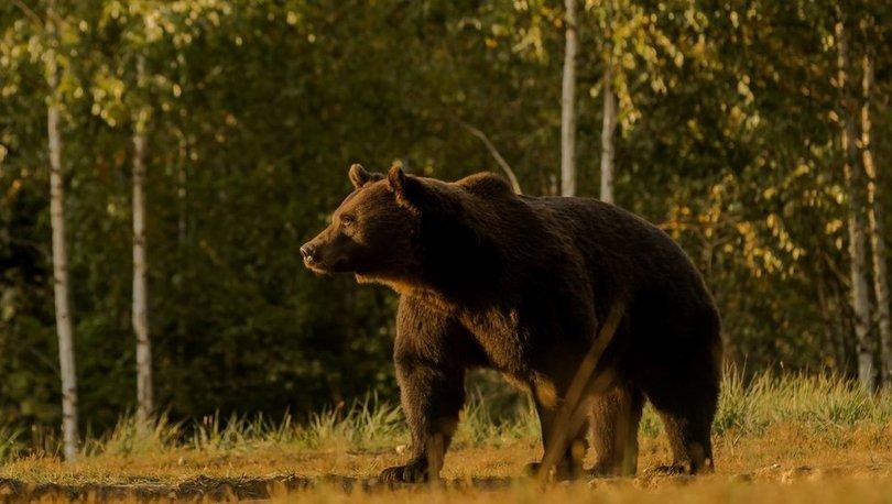 Liechtenstein prensi AB'nin en büyük ayısını öldürmekle suçlanıyor