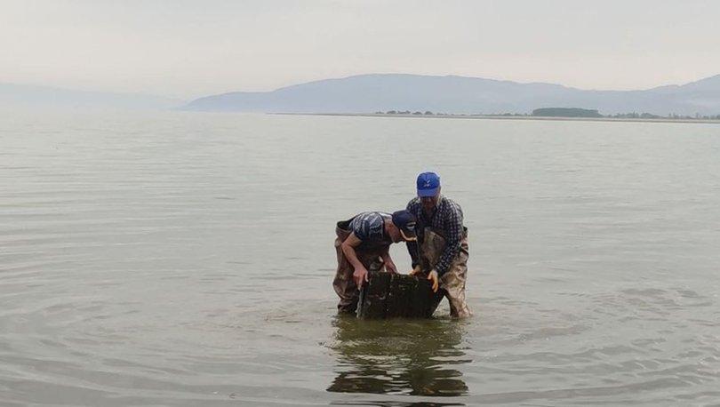 Efsane yayılıyor... İznik Gölü'nde ağlara takıldı! - Haberler