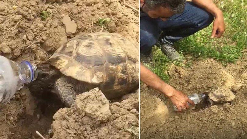 Bitkin haldeki kaplumbağaya su içirdi