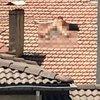 Çatıda çıplak güneşlenen kişi gözaltına alındı
