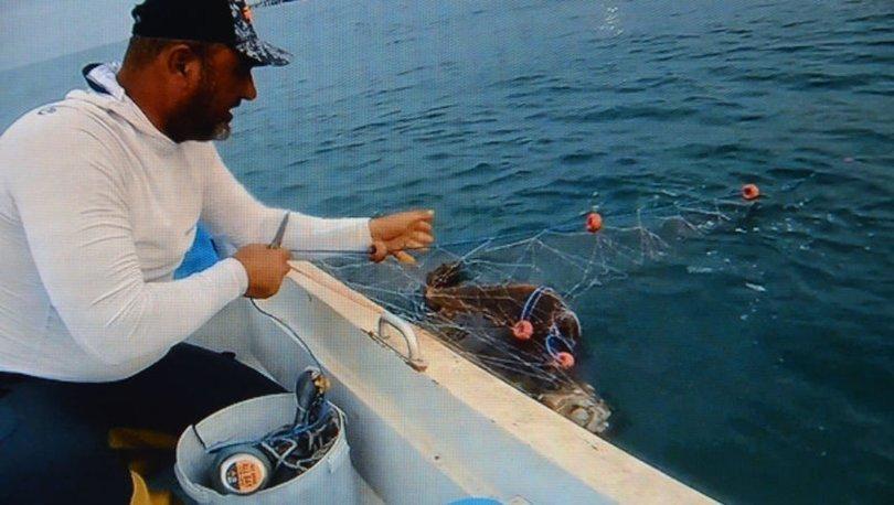 Amatör balıkçılar ağlara takılan caretta carettayı böyle kurtardı