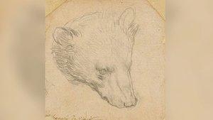Da Vinci'nin ayı çizimi açık artırmaya çıkıyor