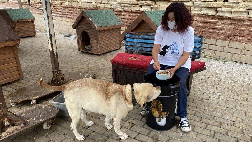 SON DAKİKA: Sahtekârlar bu kez de hayvanseverleri dolandırdı - Haberler