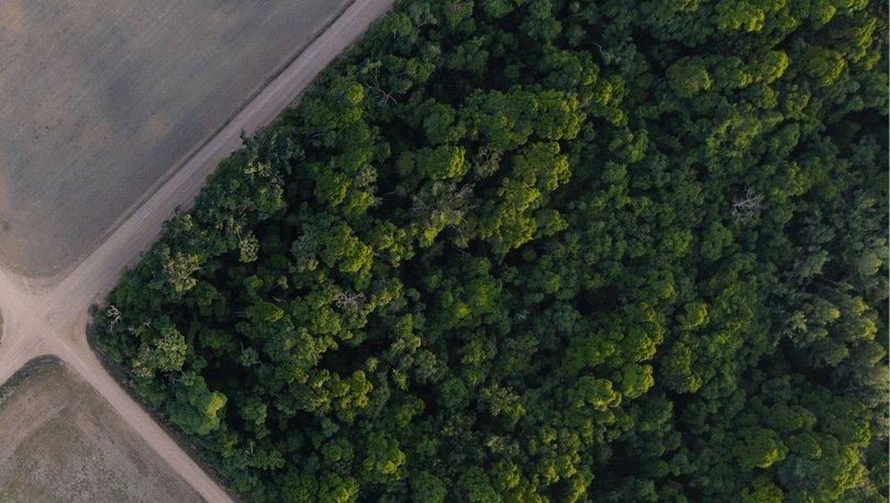 Amazon'daki Yanomami kabilesi yasa dışı altın madencilerine direniyor