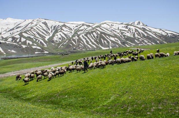 Yeşil örtü ve karlı dağlarla iki mevsim bir arada