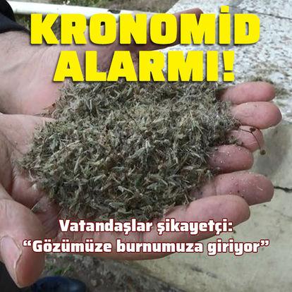 Büyükçekmece'de kronomid alarmı! Herkes şikayetçi