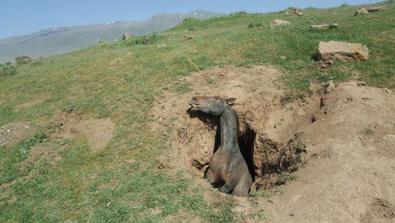 CAN ALDI! Bitlis'te definecilerin kazdığı çukura düşen at feci şekilde can verdi! - Haberler