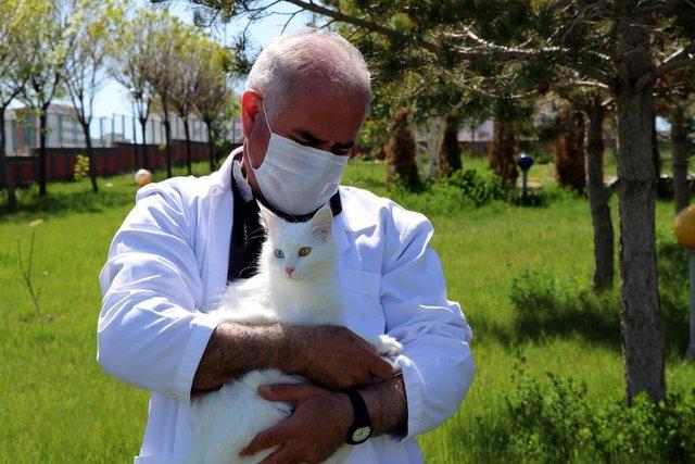 24 Van kedisi, 70'e yakın yavru doğurdu