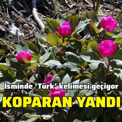 İsminde 'Türk' kelimesi geçiyor... Koparan yandı!