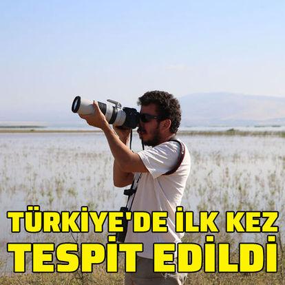 Türkiye'de ilk kez tespit edildi
