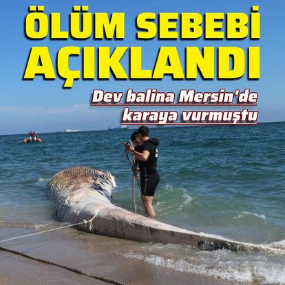 Dev balinanın ölüm nedeni açıklandı