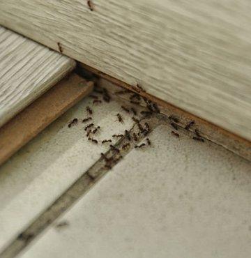 Sıcakların gelişiyle birlikte evlerde artan karıncalar ve diğer böcekler, artık sorun değil! Kolaylıkla bulabileceğiniz malzemelerle karıncaları, gümüş böceklerini ya da hamam böceklerini evinizden uzaklaştırabilirsiniz. İşte böceklerden doğal yollarla kurtulma rehberi...
