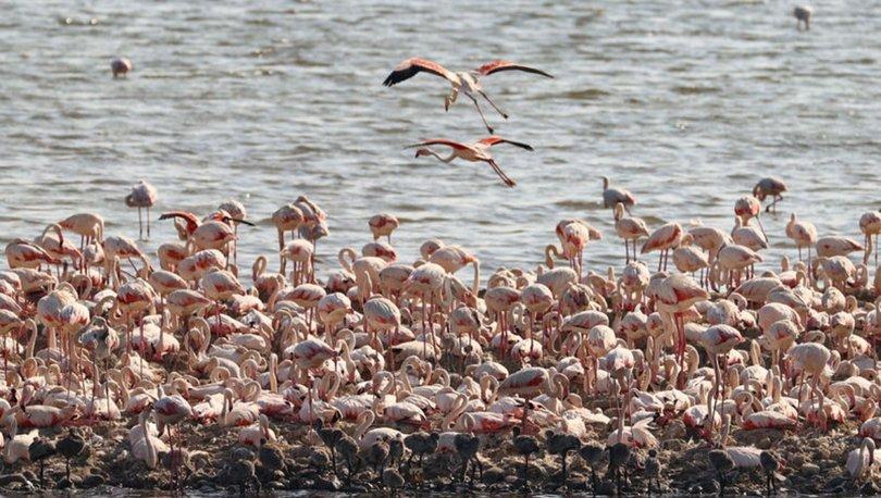 Flamingo adası binlerce allı turnaya kucak açtı