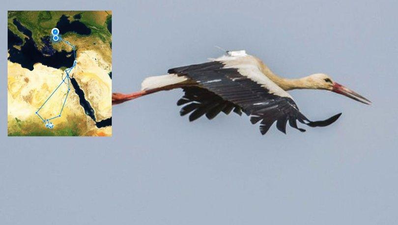 10 bin 800 kilometre uçan leylek 'Klippi', Bursa'da