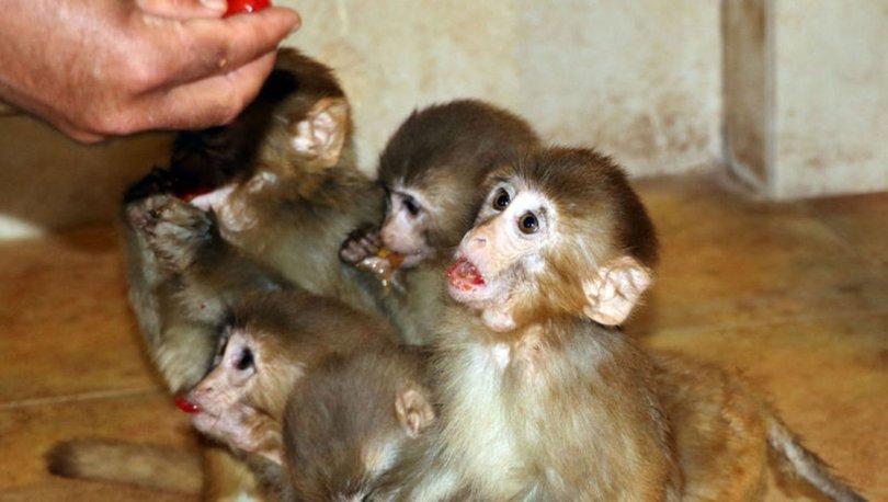 Sınırda ele geçirilen 12 maymunu elleriyle besliyorlar