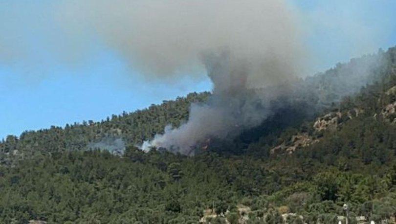 Milas'ta orman yangını kontrol altına alındı