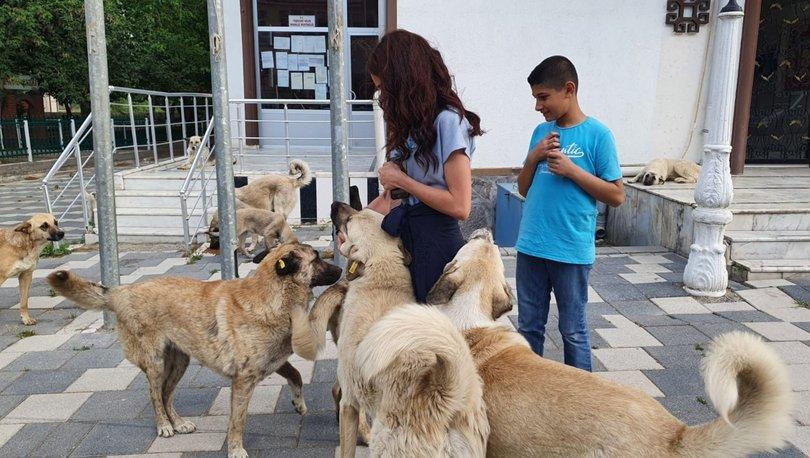 Pandemi döneminde ilçe ilçe gezip, sokak hayvanlarını beslediler