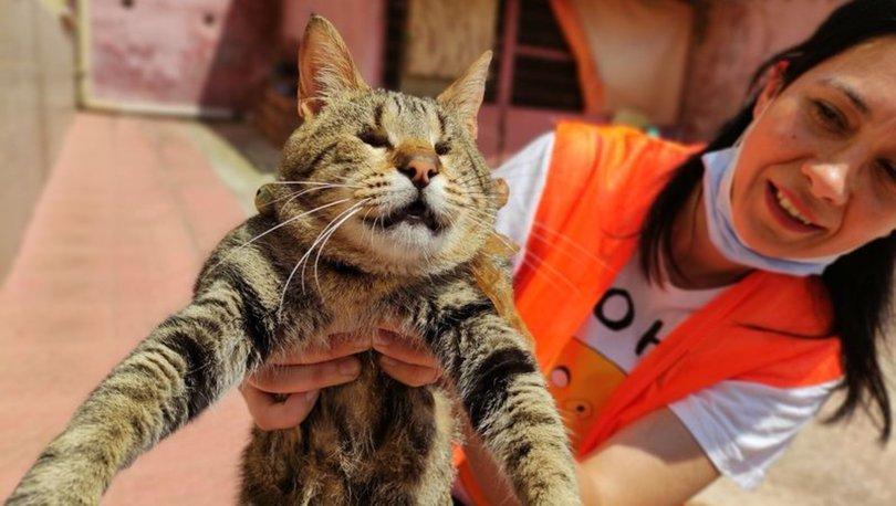 KEDİ ANNESİ! Engelli sokak kedilerine evini açtı: