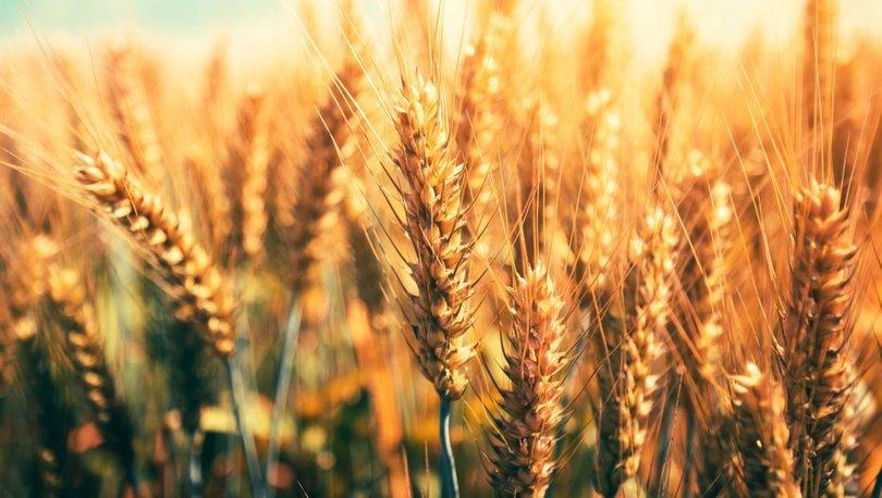Küresel gıda fiyatları 10 yılın zirvesine yükseldi