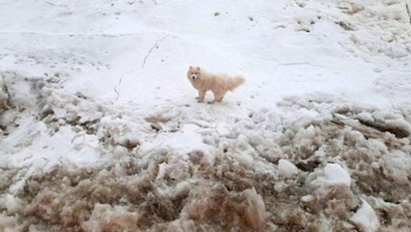 Kuzey Kutbu'nda kaybolan köpeği, Rus buzkıran gemisi buldu