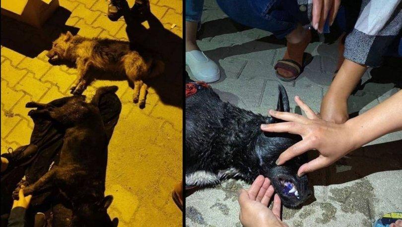 VAHŞET! Son dakika: Vicdansızlar 5 köpeği zehirledi - Haberler